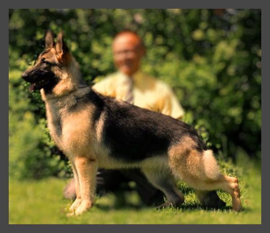 dubai dogshow
